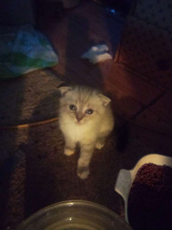 cat-for-sale-in-clearlake-ca
